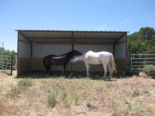 Horse Barn 2010 005