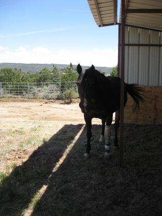 Horse Barn 2010 007